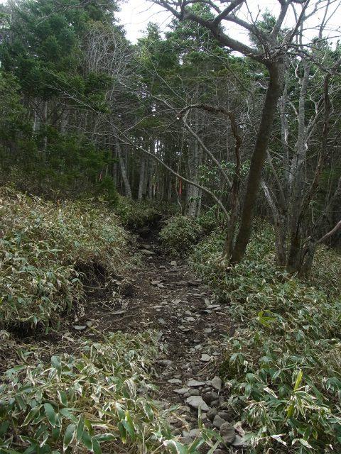 黒斑山(表コース・中コース) 登山口コースガイド 笹原【登山口ナビ】