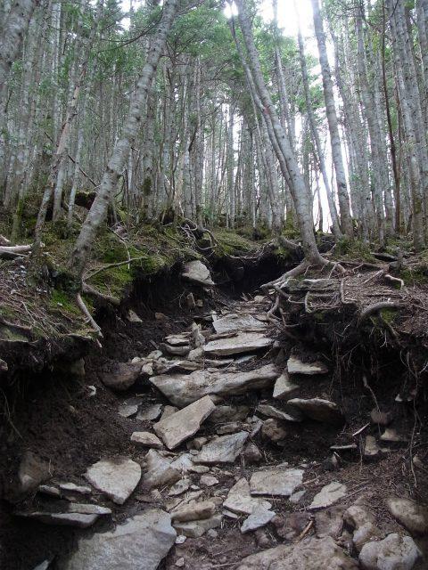 黒斑山(表コース・中コース) 登山口コースガイド 針葉樹林の一本道【登山口ナビ】