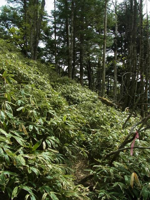 和名倉山(三ノ瀬~東仙波)登山口コースガイド 笹薮【登山口ナビ】