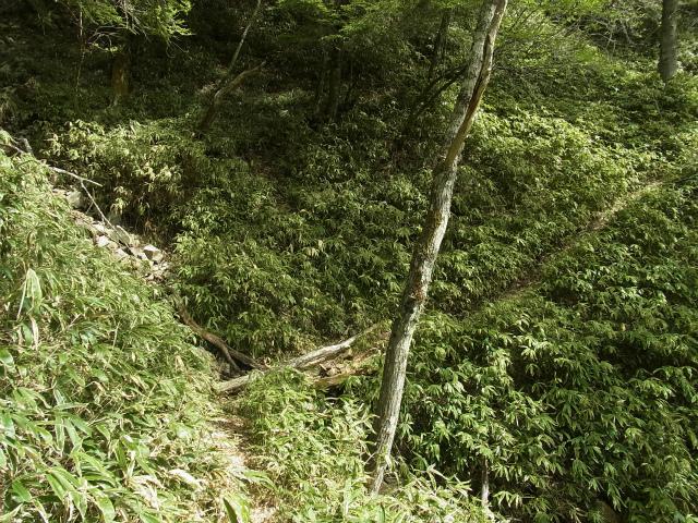 和名倉山(三ノ瀬~東仙波)登山口コースガイド 笹薮の道【登山口ナビ】