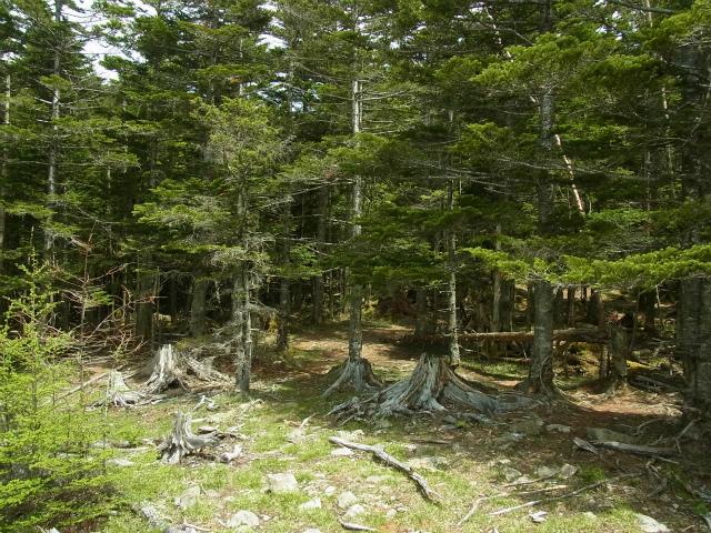 和名倉山(三ノ瀬~東仙波)登山口コースガイド 【登山口ナビ】