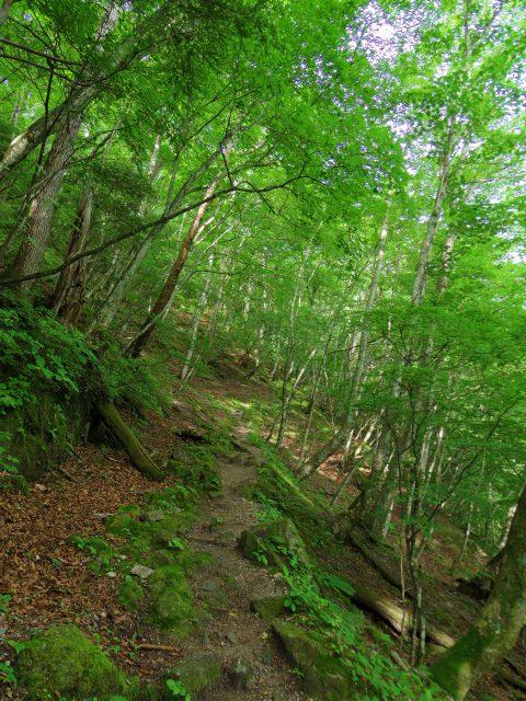 甲斐駒ヶ岳(黒戸尾根)登山口コースガイド【登山口ナビ】