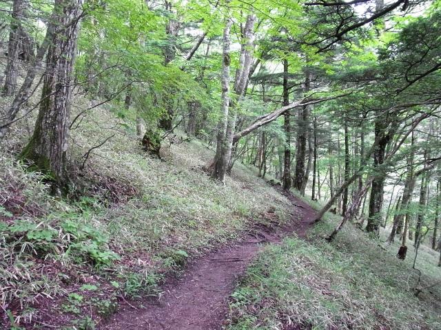 甲斐駒ヶ岳(黒戸尾根)登山口コースガイド クマザサの道【登山口ナビ】