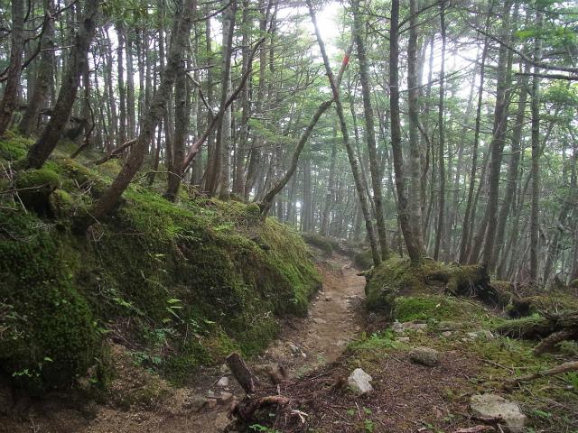 甲斐駒ヶ岳(黒戸尾根)登山口コースガイド 五合目への下り【登山口ナビ】