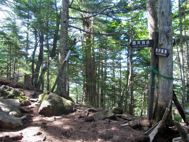 八ヶ岳・天狗岳(西尾根~黒百合平周回) 登山口コースガイド 西尾根分岐【登山口ナビ】