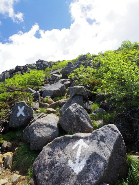 八ヶ岳・天狗岳(西尾根~黒百合平周回) 登山口コースガイド 山頂直下の急登【登山口ナビ】