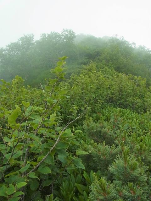八ヶ岳・赤岳(天狗尾根) 登山口コースガイド ハイマツの藪漕ぎ【登山口ナビ】