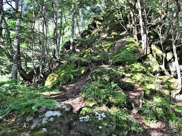 八ヶ岳・赤岳(防火線の頭~県界尾根) 登山口コースガイド【登山口ナビ】