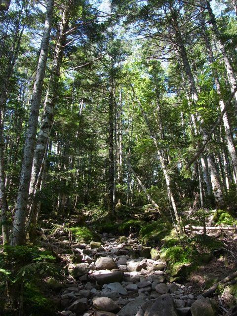 蓼科山(大河原峠~天祥寺原周回) 登山口コースガイド 苔むした林床の急登【登山口ナビ】