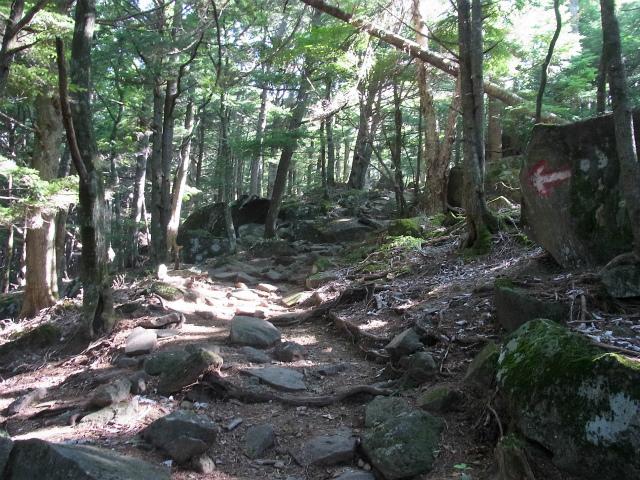 八ヶ岳・編笠山(観音平~青年小屋周回) 登山口コースガイド【登山口ナビ】