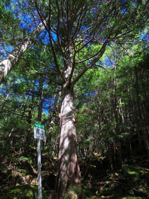 金峰山・五丈石(アコウ平~表参道)登山口コースガイド 山梨森林100選 ネズコ林【登山口ナビ】