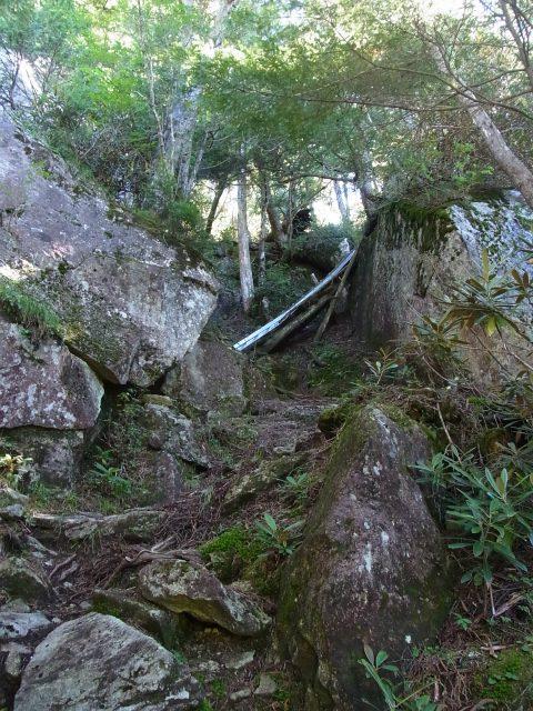 金峰山・五丈石(アコウ平~表参道)登山口コースガイド 3本目の梯子【登山口ナビ】