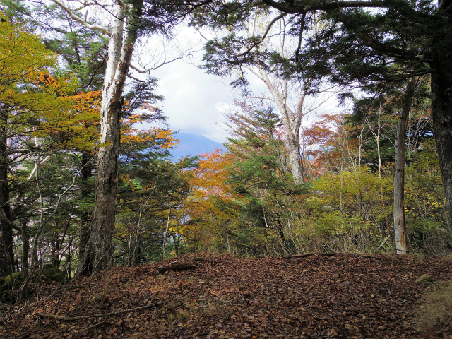 高谷山(夜叉神峠~桧尾峠周回)登山口コースガイド 高谷山山頂【登山口ナビ】