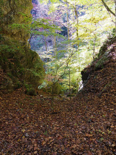 両神山(日向大谷・表参道ルート) 登山口コースガイド 白藤の滝への下り【登山口ナビ】