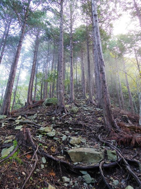 蛭ヶ岳(日陰沢橋~姫次)登山口コースガイド 植林帯【登山口ナビ】