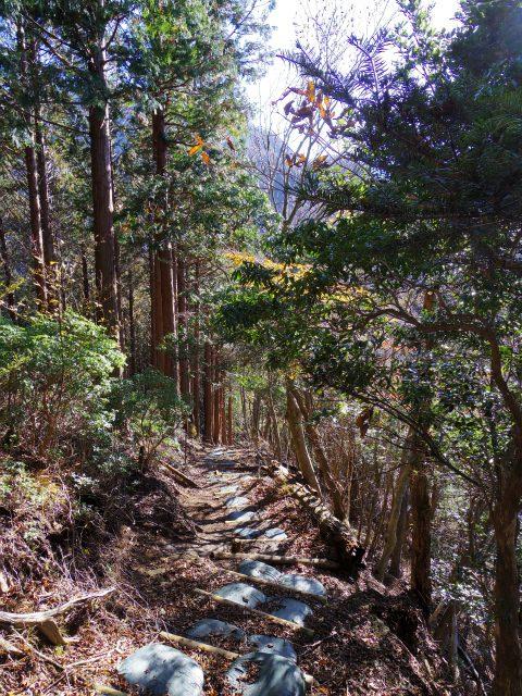蛭ヶ岳(日陰沢橋~姫次)登山口コースガイド【登山口ナビ】