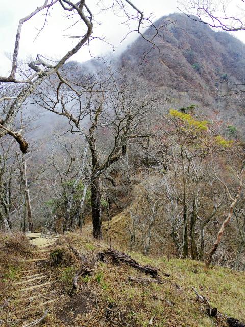 蛭ヶ岳(源蔵尾根~臼ヶ岳)登山口コースガイド ミカゲ沢ノ頭【登山口ナビ】