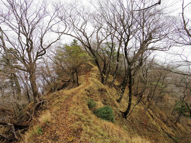 蛭ヶ岳(源蔵尾根~臼ヶ岳)登山口コースガイド【登山口ナビ】