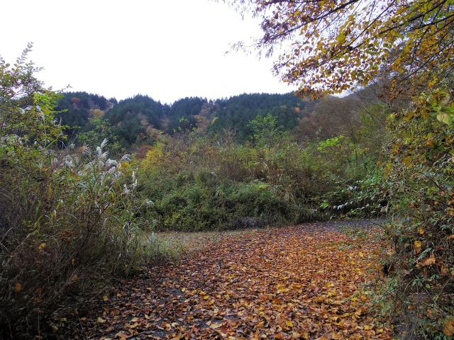 蛭ヶ岳(源蔵尾根~臼ヶ岳)登山口コースガイド 神の川林道右ヘアピンカーブ【登山口ナビ】