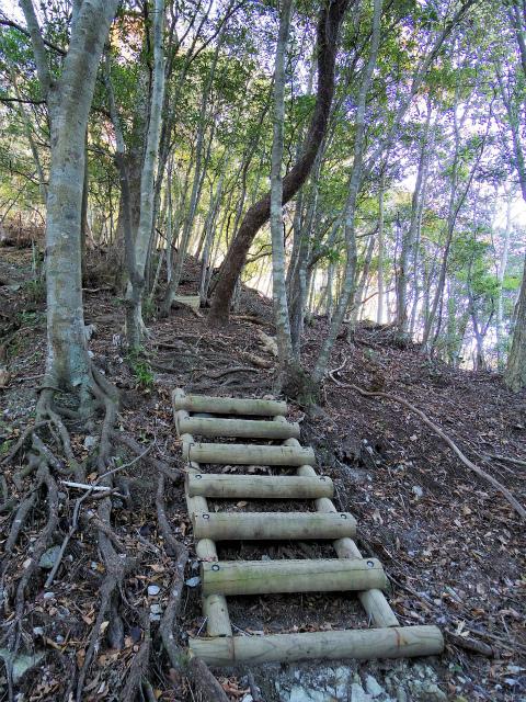 檜洞丸(板小屋沢~石棚山稜) 登山口コースガイド 梯子【登山口ナビ】