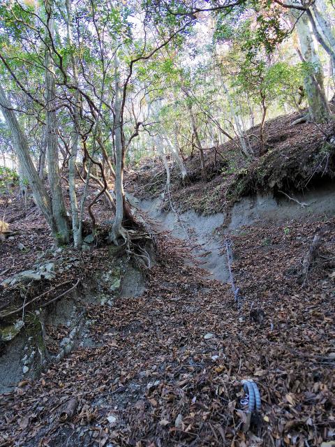檜洞丸(板小屋沢~石棚山稜) 登山口コースガイド 鎖場【登山口ナビ】