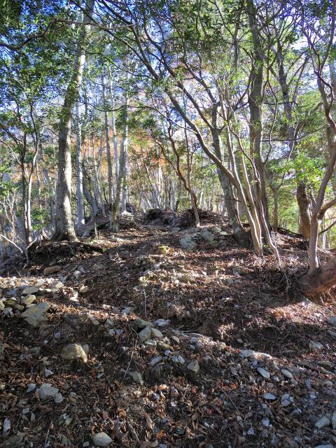 檜洞丸(板小屋沢~石棚山稜) 登山口コースガイド 九十九折れの急登【登山口ナビ】