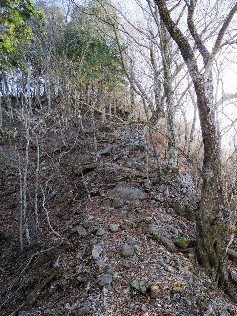 檜洞丸(板小屋沢~石棚山稜) 登山口コースガイド 鞍部からの登り返し【登山口ナビ】