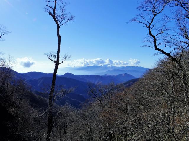 檜洞丸(板小屋沢~石棚山稜) 登山口コースガイド 鞍部からの箱根の眺望【登山口ナビ】