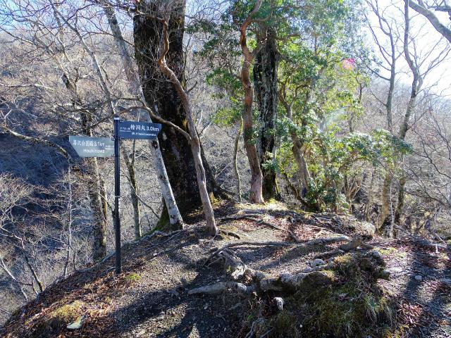 檜洞丸(板小屋沢~石棚山稜) 登山口コースガイド ヤブ沢ノ頭【登山口ナビ】