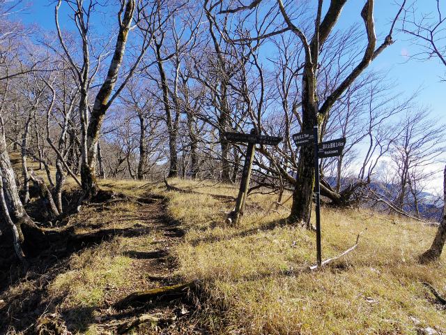 檜洞丸(板小屋沢~石棚山稜) 登山口コースガイド 石棚山【登山口ナビ】