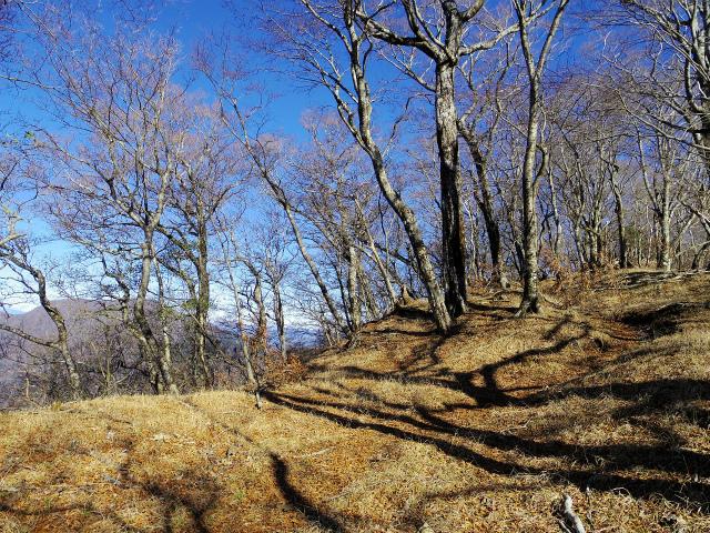 檜洞丸(板小屋沢~石棚山稜) 登山口コースガイド【登山口ナビ】