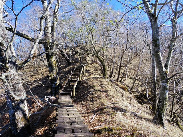 檜洞丸(板小屋沢~石棚山稜) 登山口コースガイド 石棚山稜の階段【登山口ナビ】