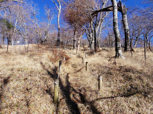 檜洞丸(板小屋沢~石棚山稜) 登山口コースガイド 石棚山稜の鹿柵【登山口ナビ】