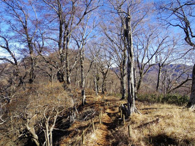 檜洞丸(板小屋沢~石棚山稜) 登山口コースガイド テシロノ頭【登山口ナビ】