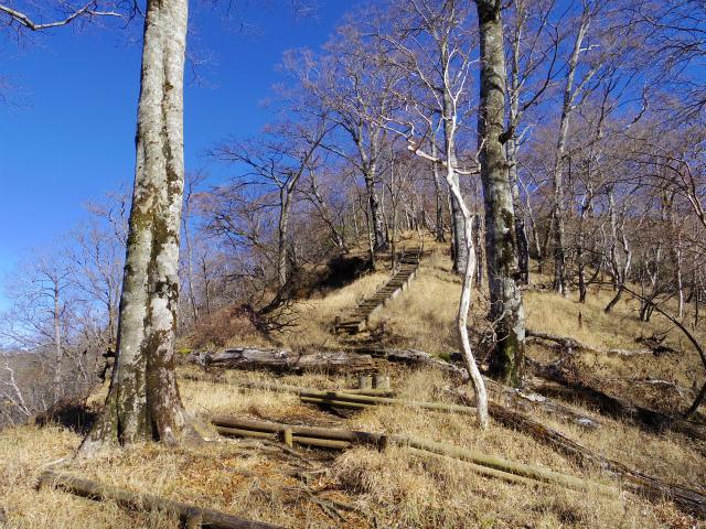 檜洞丸(板小屋沢~石棚山稜) 登山口コースガイド 崩壊地上部【登山口ナビ】