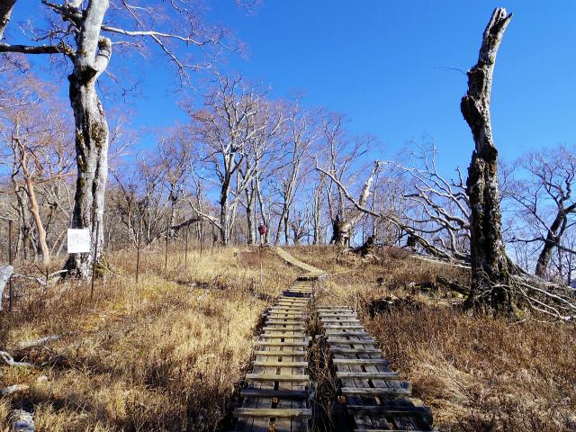 檜洞丸(板小屋沢~石棚山稜) 登山口コースガイド 木工道【登山口ナビ】