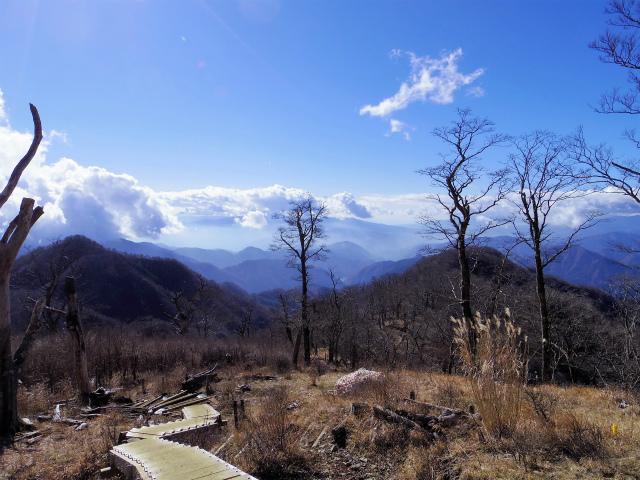 檜洞丸(板小屋沢~石棚山稜) 登山口コースガイド 山頂直前の階段【登山口ナビ】