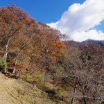 檜洞丸(ツツジ新道)登山口コースガイド 東沢トラバース【登山口ナビ】