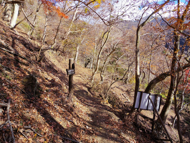 檜洞丸(ツツジ新道)登山口コースガイド 東沢コース分岐【登山口ナビ】