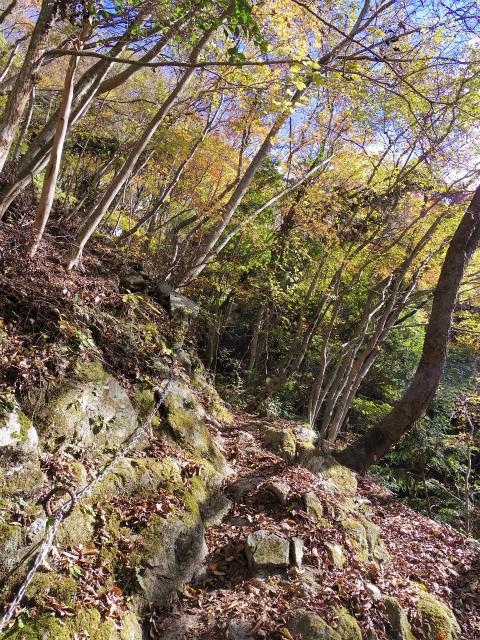 檜洞丸(ツツジ新道)登山口コースガイド 鎖【登山口ナビ】
