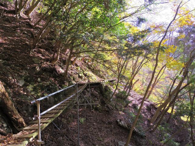檜洞丸(ツツジ新道)登山口コースガイド 木橋【登山口ナビ】
