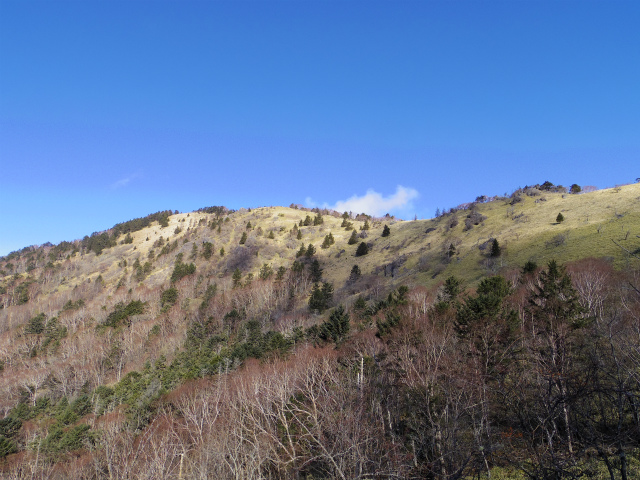 大菩薩嶺(旧道~唐松尾根周回コース) 登山口コースガイド 旧道からの稜線【登山口ナビ】