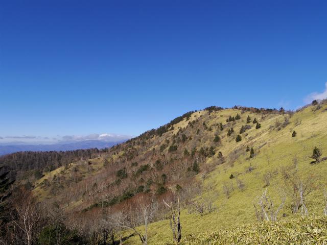 大菩薩嶺(旧道~唐松尾根周回コース) 登山口コースガイド 稜線の奥に八ヶ岳【登山口ナビ】