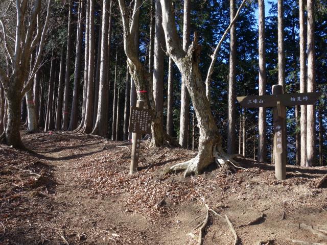 三峰山(物見峠~不動尻周回)登山口コースガイド 748mピーク分岐【登山口ナビ】