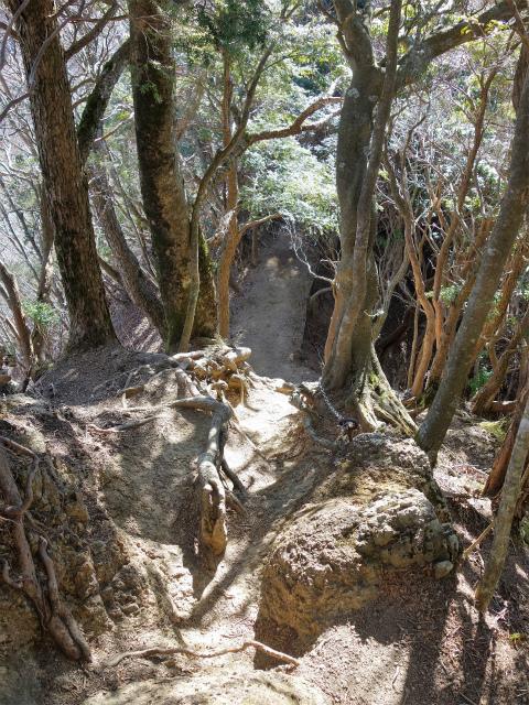 三峰山(物見峠~不動尻周回)登山口コースガイド 中峰山頂直下【登山口ナビ】