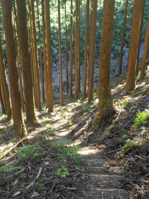 三峰山(物見峠~不動尻周回)登山口コースガイド 【登山口ナビ】