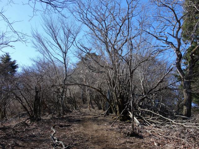 三峰山(物見峠~不動尻周回)登山口コースガイド 唐沢峠方面の稜線【登山口ナビ】