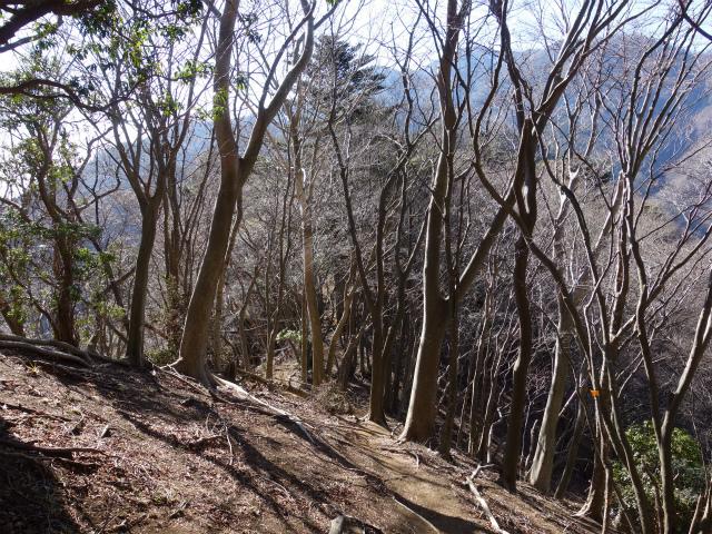三峰山(物見峠~不動尻周回)登山口コースガイド 唐沢峠方面【登山口ナビ】