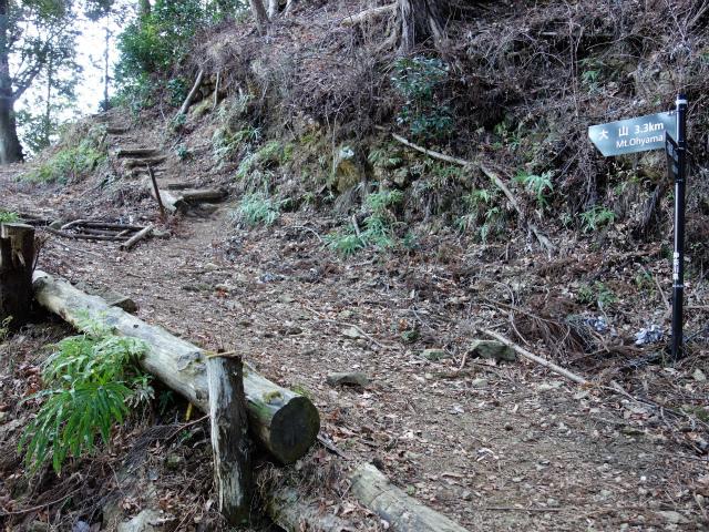 大山(不動尻~唐沢峠)登山口コースガイド 作業道横断【登山口ナビ】