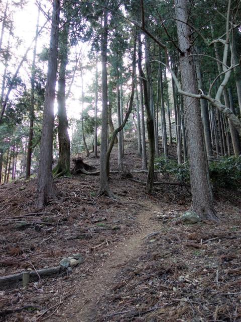 大山(不動尻~唐沢峠)登山口コースガイド 植林帯急登【登山口ナビ】